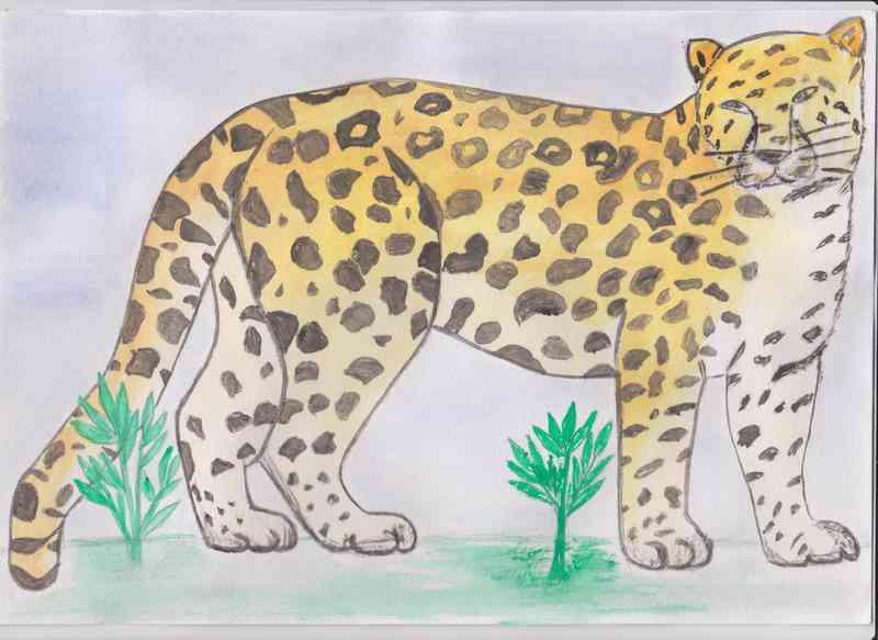 """""""Дальневосточный леопард"""" Астахов А."""