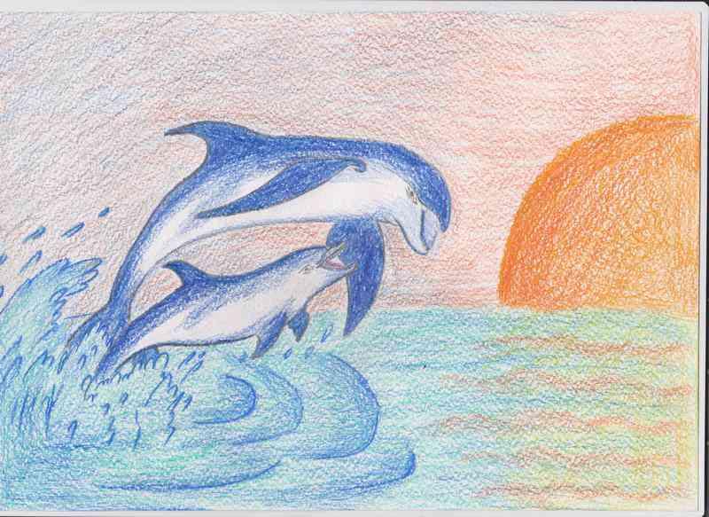 """""""Атлантический белобокий дельфин"""" Ваховский А."""