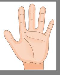 Рука.